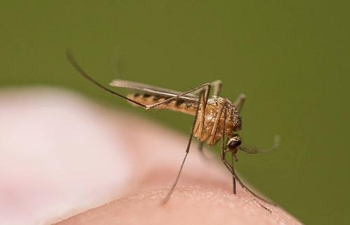 2019 fick cirka 200 svenskar malaria, en fördubbling på tio år.