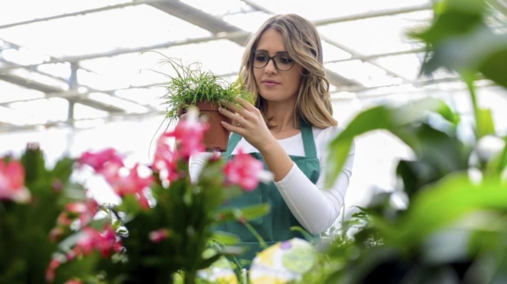 Äger du inga gröna fingrar, eller har du bara ont om ljus? Då kan dessa lättskötta växter vara något för ditt hem.