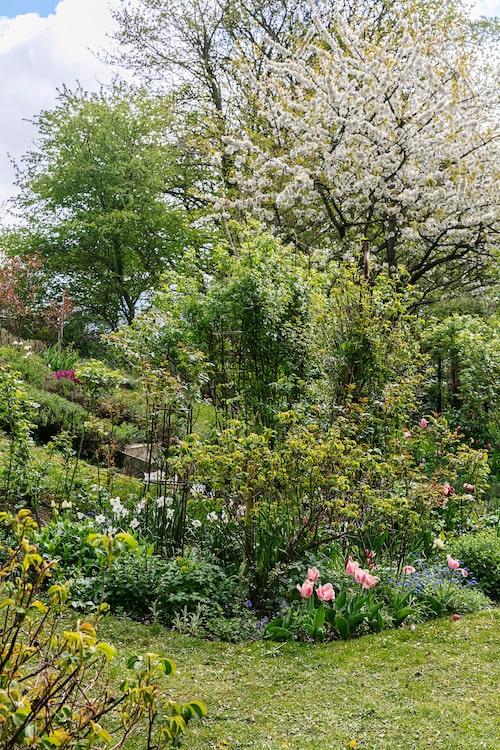 I rabatten blommar bland annat tulpaner, pingstliljor och blå nepeta.