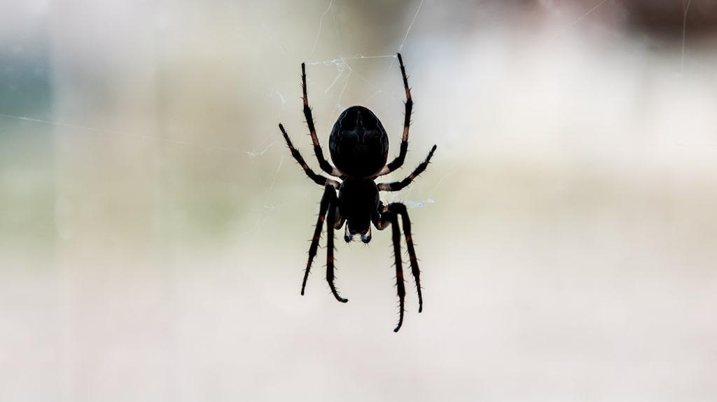 Men samtidigt kommer alla insekter och vill in i ditt hem. Dock finns ett superknep för att slippa dem!