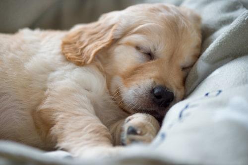 Hundvalpar älskar att ta en vilopaus.