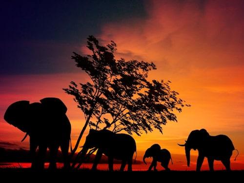 Tälta bland vilda djur i Serengeti, Tanzania.