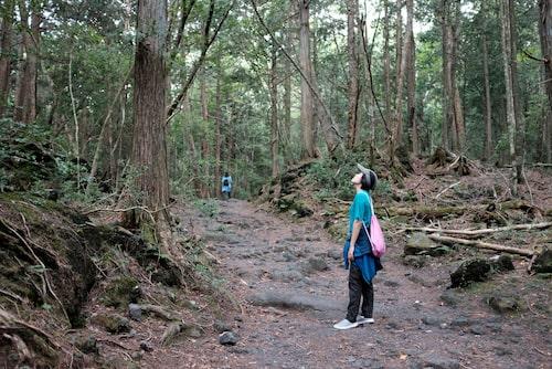 Speciellt för Aokigahara är att det inte finns något djurliv, vilket gör skogen ovanligt tyst och fridfull.