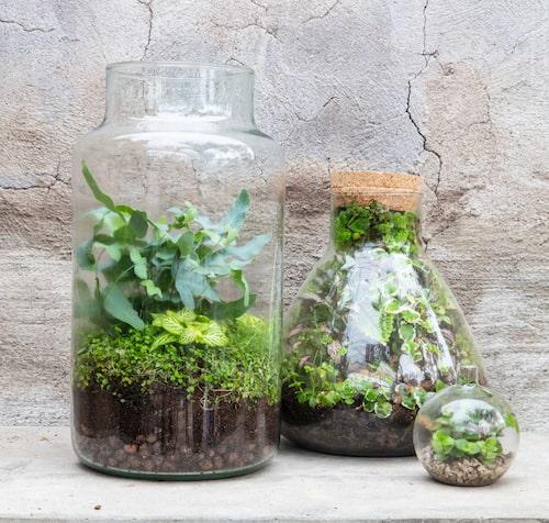 Fyll med stenar och sand. Stenar, sand och marktäckande växter passar fint i växtterrarium. Dessa planteringar är skapade av personalen på Slottsträdgården Ulriksdal.