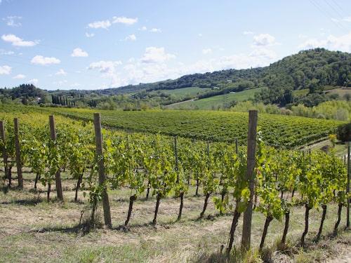 För den italienska vingården Vignano i Toscana är hållbarhet en ledstjärna. Vinerna från gården är alla biodynamiska.