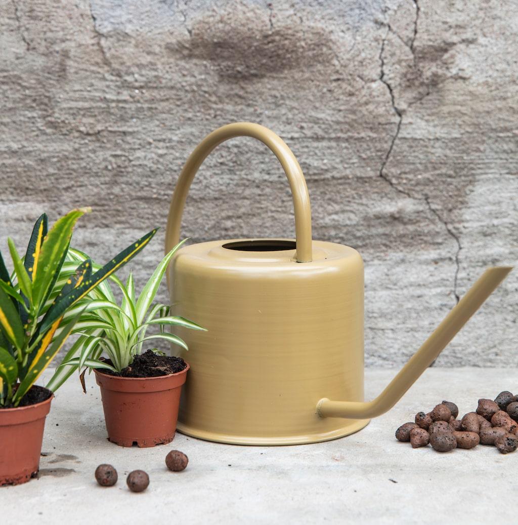 Du behöver bara vattna ditt terrarium efter att du planterat, sedan sköter det sig själv.
