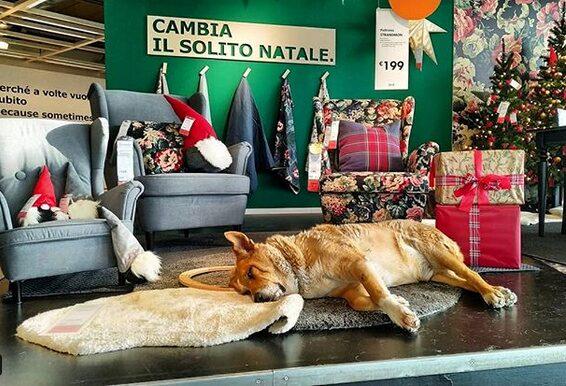 Där låter man nämligen hundar utan hem komma och vila.   Något många besökare uppmärksammat på Instagram.