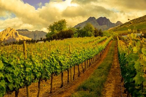 Njut av mat och dryck, och övernatta på en vingård i Stellenbosch.