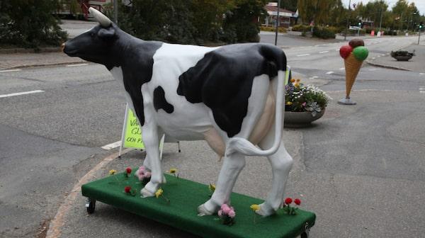 Kon vid Glassbaren i Bräcke – perfekt för en selfie.