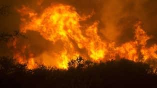 Kraftiga skogsbrander rasar i usa
