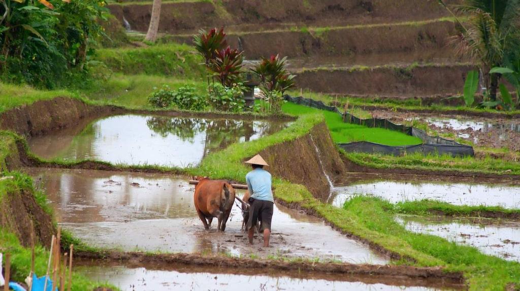 Vietnamn kniper andraplatsen och är näst billigast.