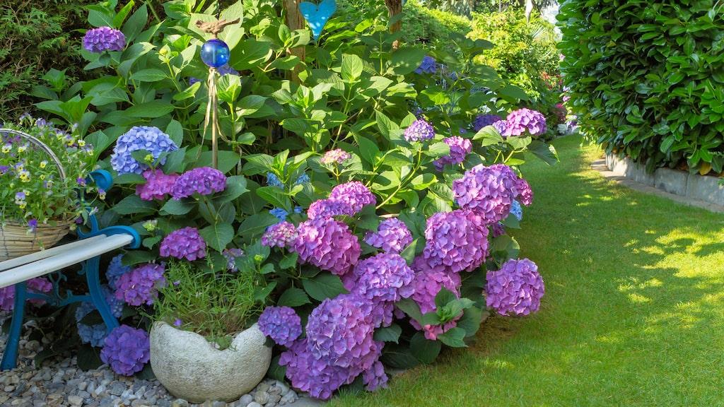 Variationerna är oändliga och den trivs lika bra inomhus som utomhus.