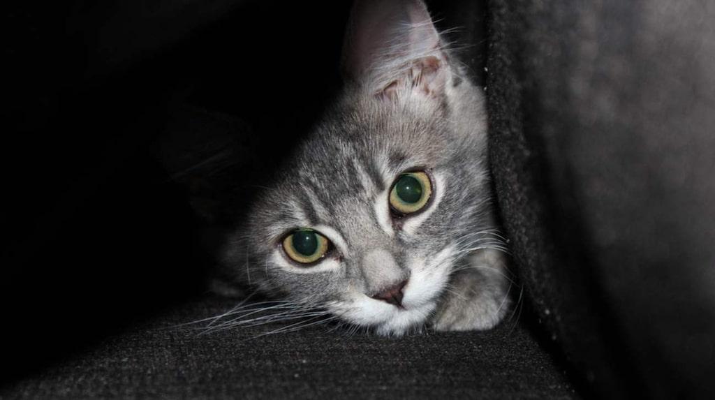 Mys med en katt i soffan – men se till att du får bort håret sedan. Klädroller och diskhandskar är två smarta knep.