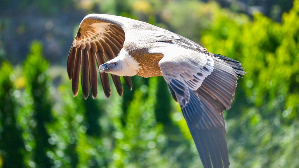 Gamar flyger fritt över Palmitos.