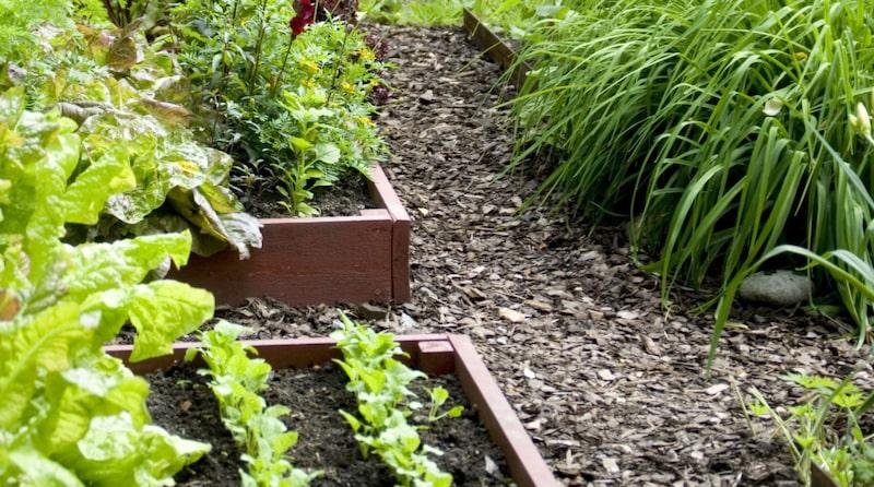 Ska du anlägga en helt ny odlingsyta och ställa dina pallkragar på gräsmattan, eller där det finns besvärliga ogräs, kan du bottna lådan med ett tjockt lager tidningar, markduk eller gamla trasmattor. Det hindrar gräs och ogräs från att växa in i lådan.