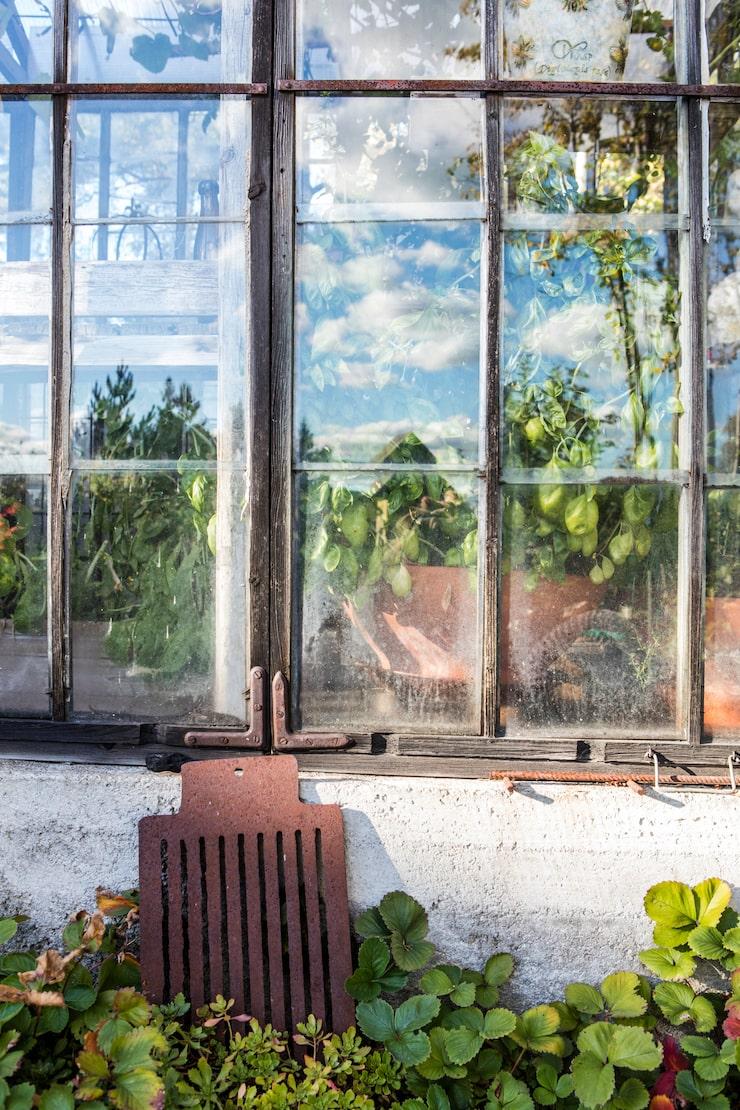 Även växthuset är byggt av gamla fönster.