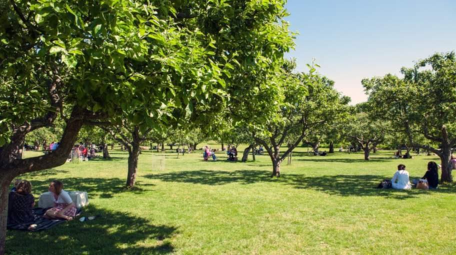 Rosendals äppellund är en populär picnickplats på Djurgården i Stockholm.