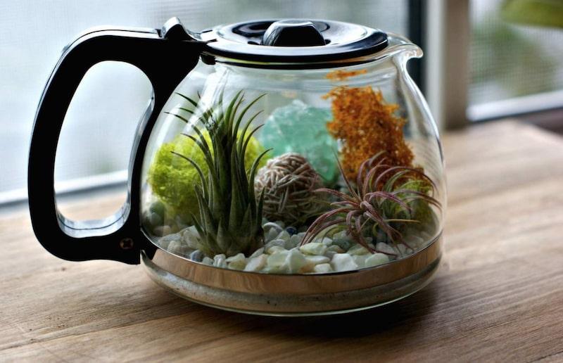 Varför inte bygga upp en liten trädgård i en kaffekanna?