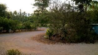 Larm om avskogning i amazonas