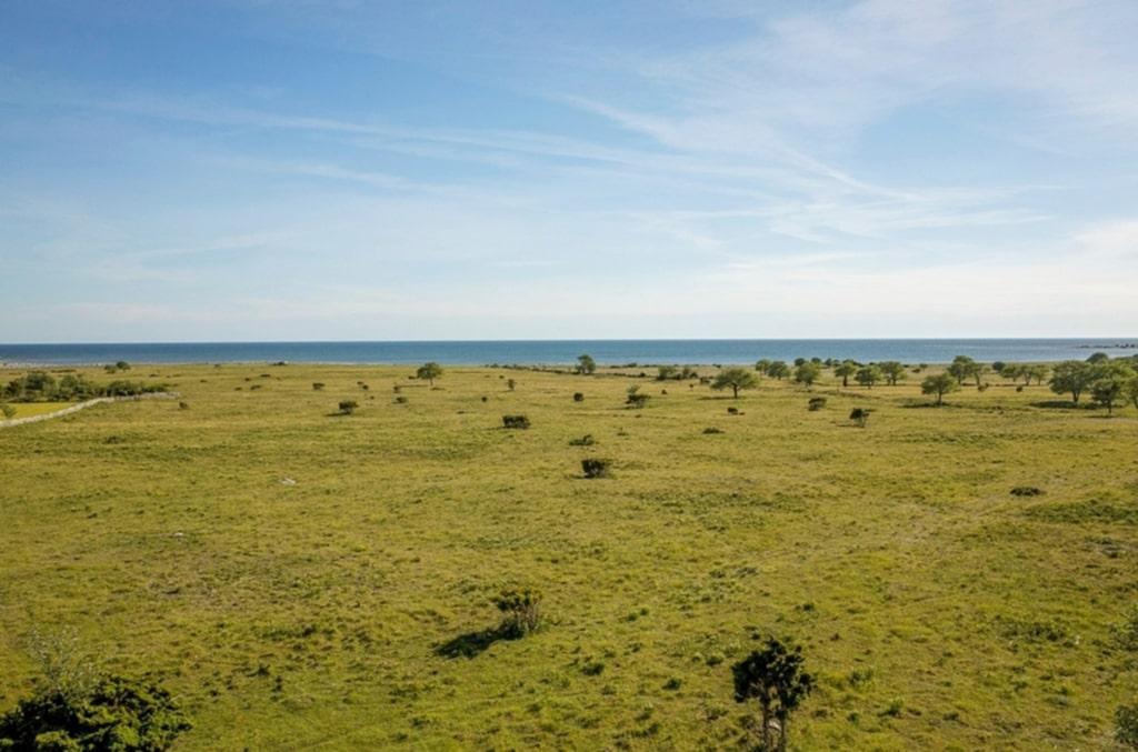 Strandbeten på Gotlands sydspets.