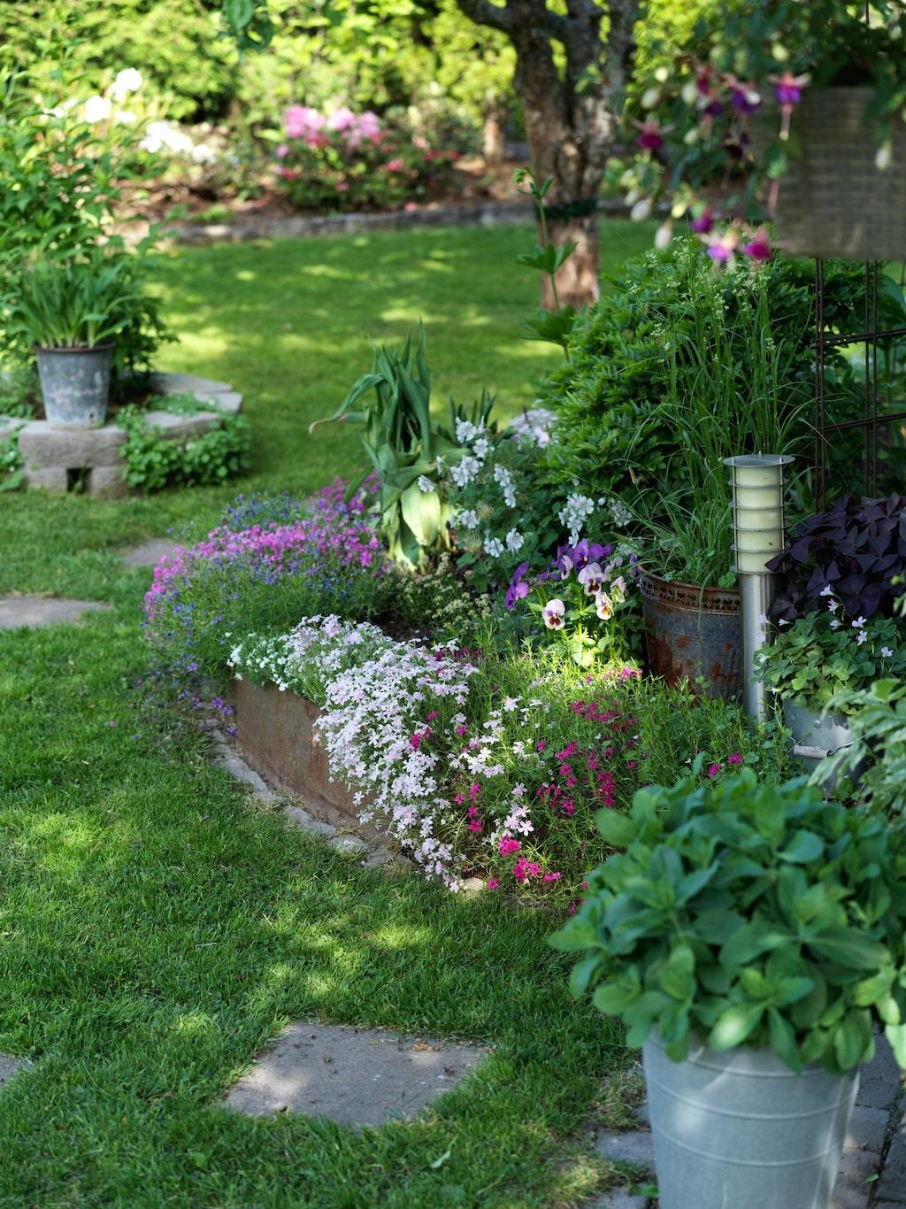 Paret är samlare av ovanliga växter och vill ha en stor blandning i sin trädgård.