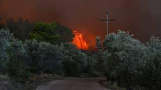 Skogsbrand rasar i grekland