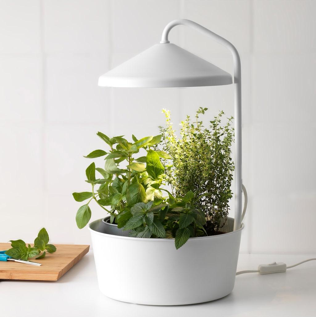 Även om chilin är lättodlad och oftast klarar sig med naturligt ljus kan det ibland behövas extra växtbelysning.  Idag finns det många olika slags växtlampor på marknaden. Här en växthållare med växtljus, 399 kr, från Ikea.