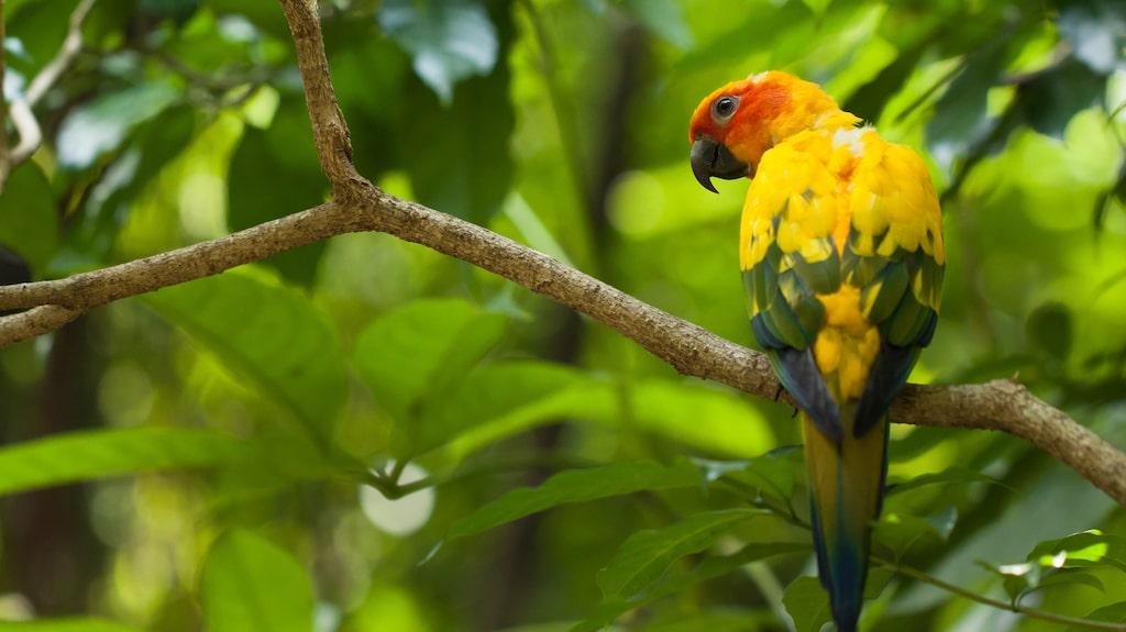 Jurong Bird Park är ett bra besöksmål för hela familjen. Här finns allt från rovfåglar till vadare, papegojor och småfåglar.