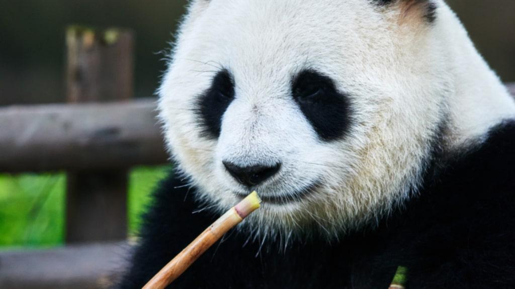 <p>Här är en som definitivt tycker att Kina har bästa maten.</p>