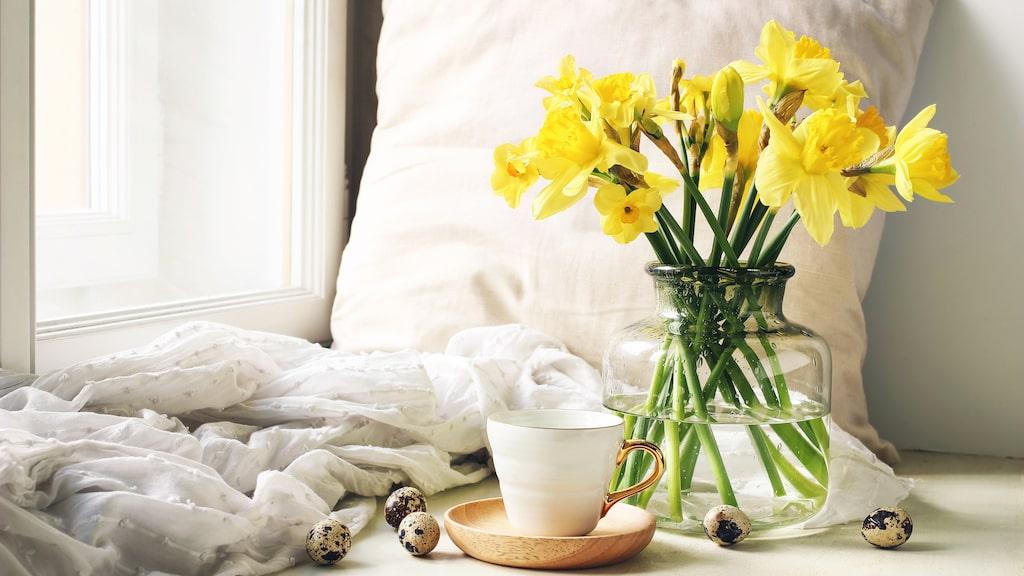 Blommor med mjuka stjälkar vill ha kallt vatten. Dit hör påskliljor. Blandade buketter placeras alltid i ljummet vatten.