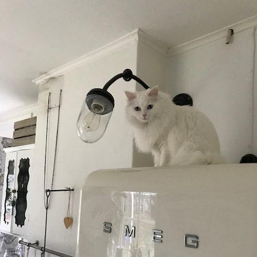 Att katten Freddie känner sig hemma är viktigt för familjen.
