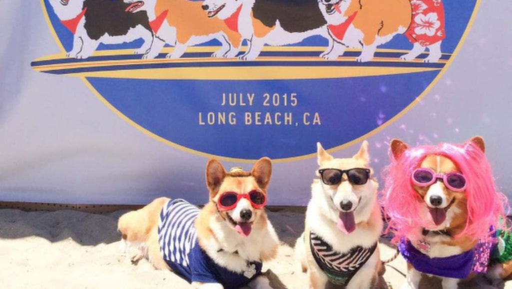 "<p><strong>korgiken</strong> #cheesin with @dalecorgi and luna snookums yesterday at #corgibeachday. didn't you know? all #corgis wear #sunglasses! #socalcorgibeachday #rosiesdogbeach #longbeach #losangeles #kenthecorgi Foto: <a href=""https://instagram.com/p/5nVBlIlalF/?taken-by=korgiken"" target=""_blank"">Instagram/korgiken</a></p>"