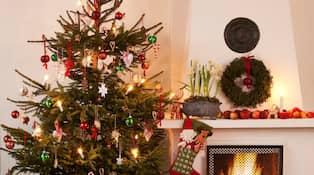 Anders Tegnell Om Slaktfester I Jul