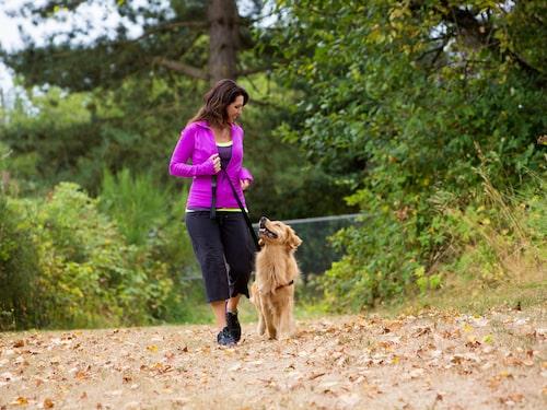 Att promenera är bra för din psykiska hälsa, ännu bättre blir promenaden med en hund!