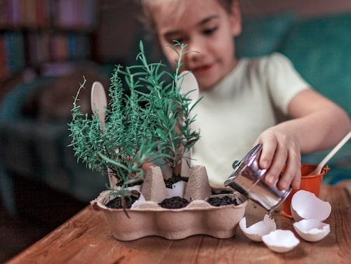 Gör det lätt – en tom äggkartong är perfekt att odla i!