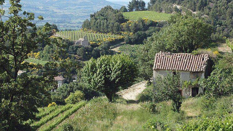 Domaine Santa Duc i franska Rhône, med svensk importör Johan Lidby Vinhandel, har två placeringar topplistan över ekoviner.