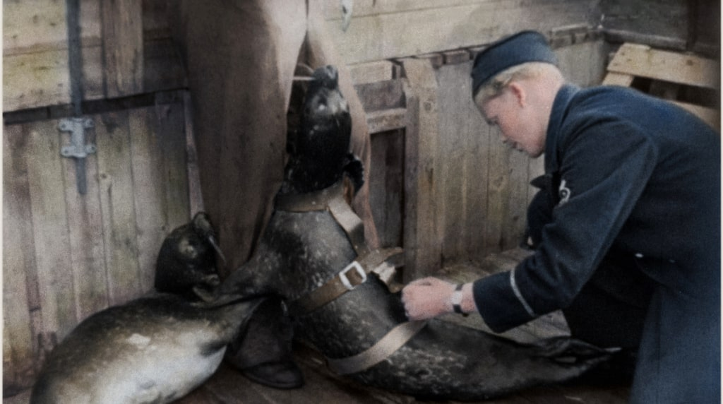 Tränade sälar markerade minor och u-båtar på fientliga uppdrag i Östersjön.