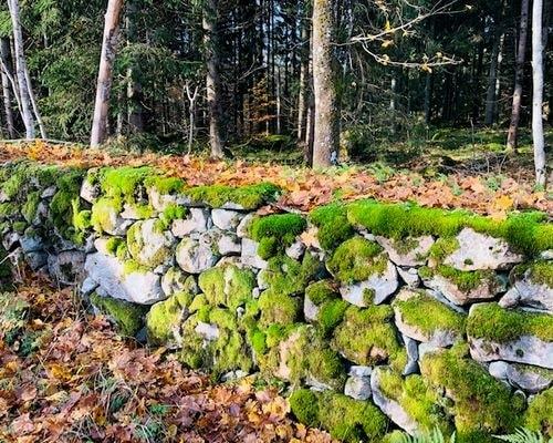 Huset ligger idylliskt, på en skogstomt med hundratals gamla lärkträd.
