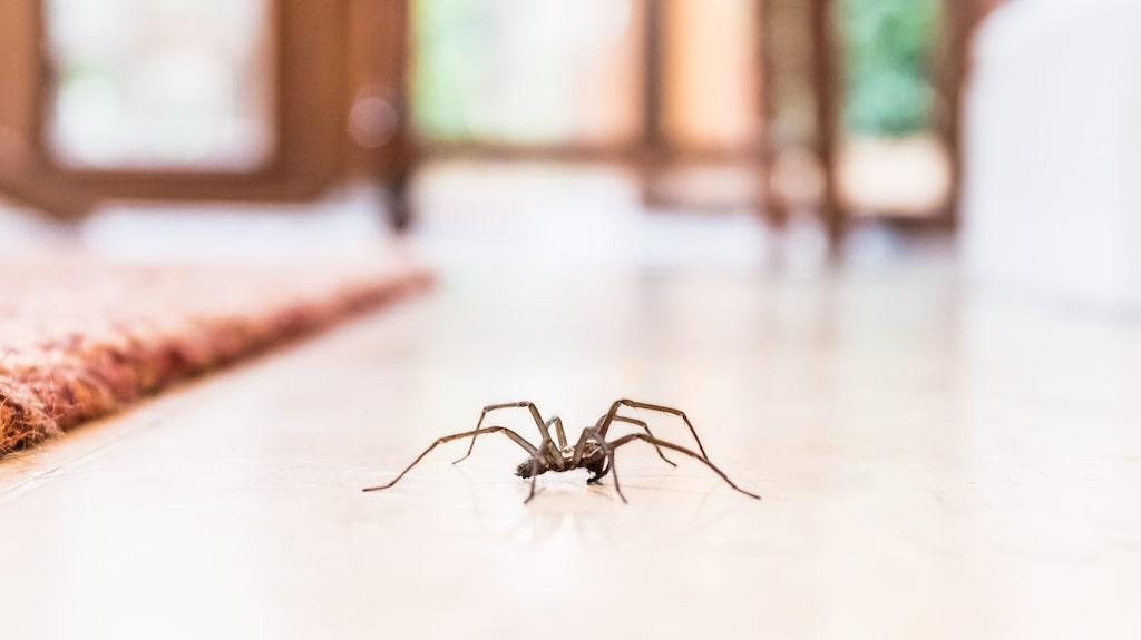 Det absolut billigaste och mest miljövänliga sättet att hålla spindlarna borta, men kanske inte det enklaste. Att hålla hemmet kliniskt rent med regelbunden dammsugning, torkning och rensning skrämmer bort alla insekter.