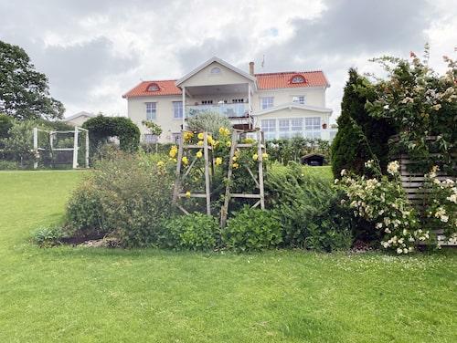 Tidigare fanns bara en gräsbacke här. Nu har Hasse Andersson och Monica Forsberg planterat tusentals buskar, nyponhäckar och aronia, som skyddar mot vinden.