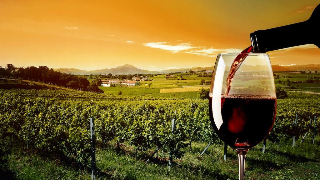 Röda viner dominerar topplistan av ekologiska viner, framröstade av Allt om Vins tunga expertjury.