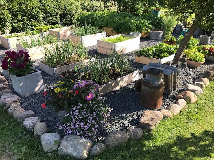 På villatomten i Jönköping odlar han olika sorters örter, grönsaker och blommor.