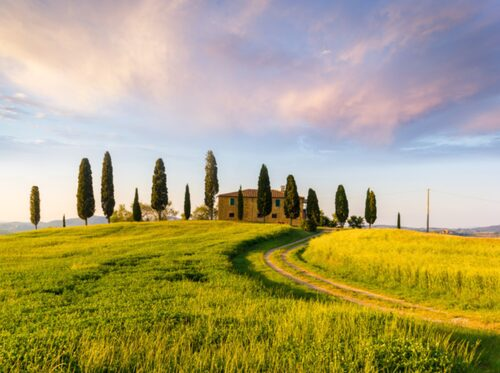 Mjuka kullar. Cypresser och olivträd. Toscanska stenhus här och där.