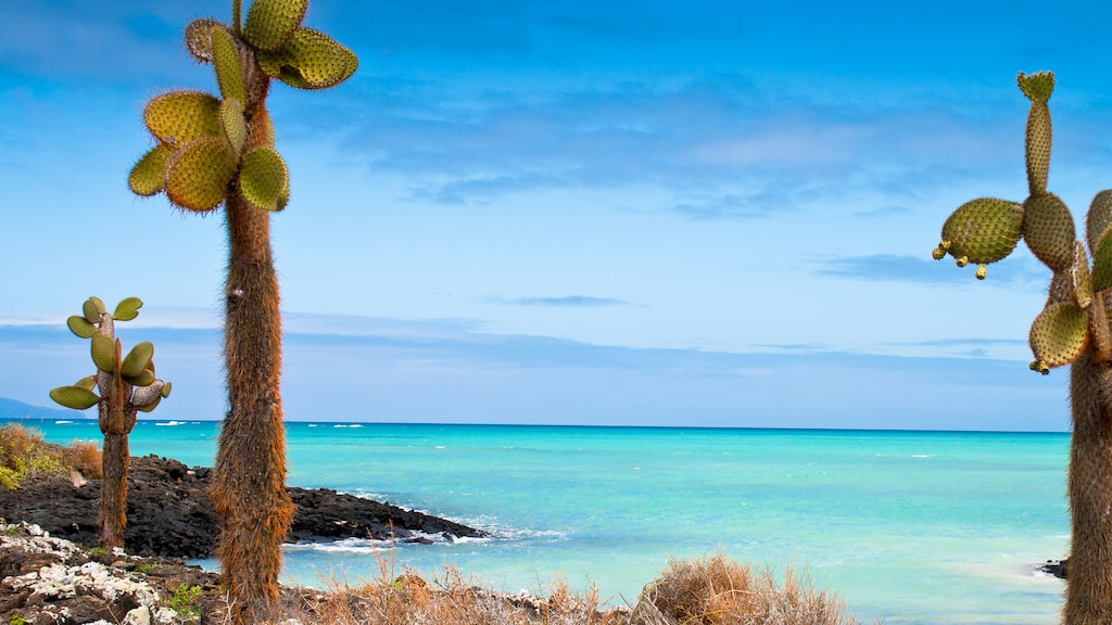 Galapagosöarna har en otrolig flora och fauna som är väl värd att uppleva på plats.