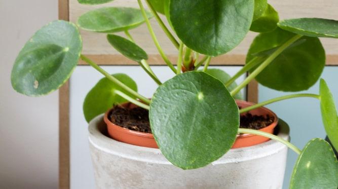 Titta regelbundet till dina växter på vintern och torka bort eventuellt damm. Det minskar risken för ohyra.