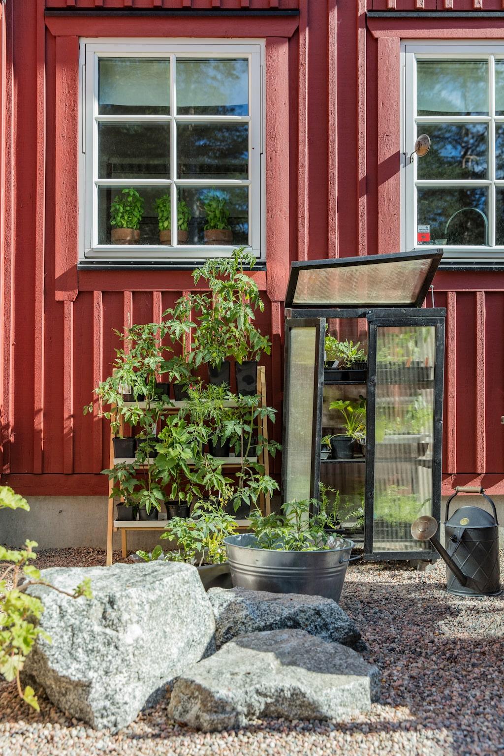 I högsäsong är hela trädgården full med uppdrivning av växter.