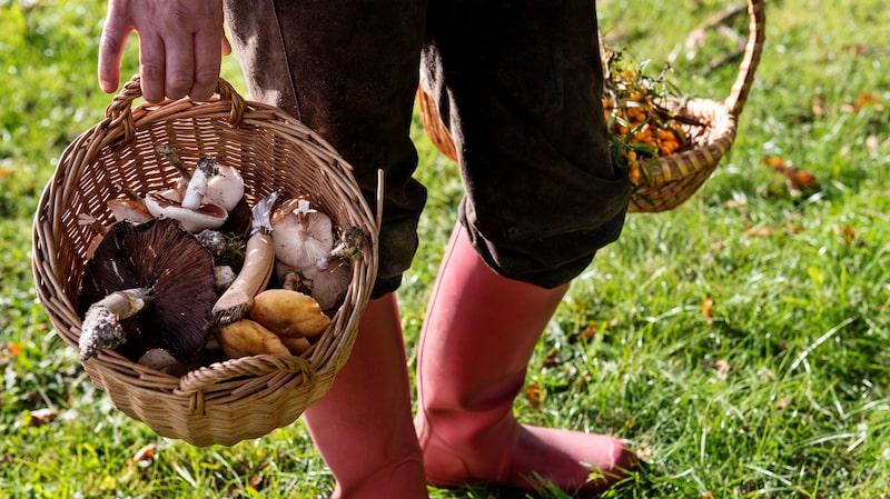 Den torra sommaren gör det svårt att hitta svamp i skogen. En följd är betydligt färre samtal till Giftinformationscentralen.