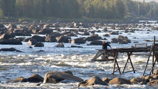 Det finns få ställen i världen där man fiskar med långskaftad håv.