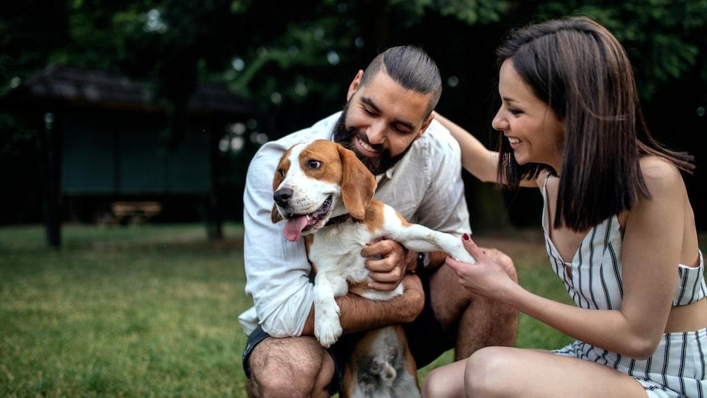 Hundtricket verkar fungera, då hundägare uppfattas som omhändertagande och mer attraktiva av andra.