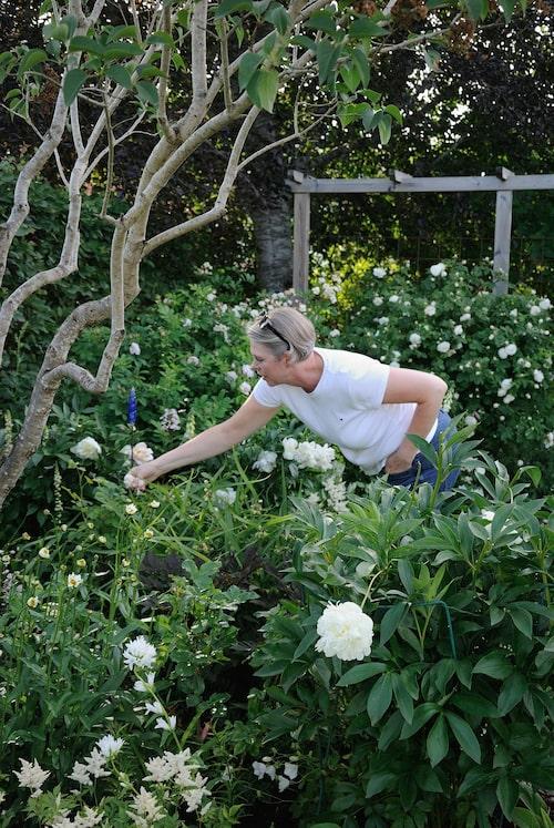 Elisabeth arbetandes bland de gröna rabatterna.